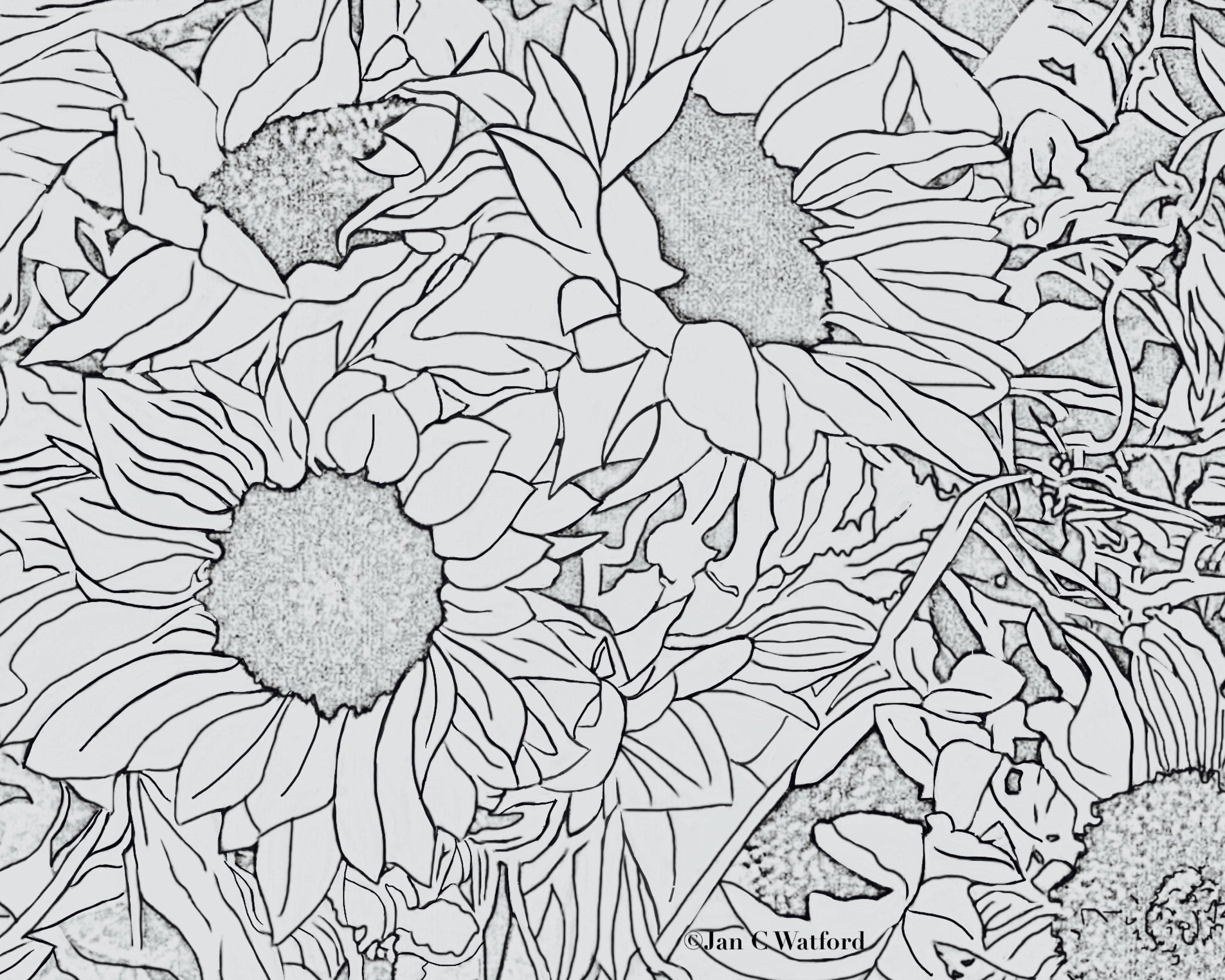 Sunflowers Adult Coloring Page Printable Digital Download